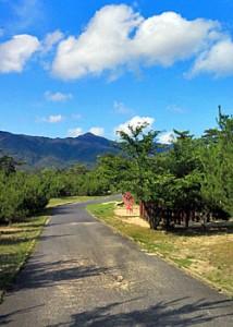 道沿いに見える山々